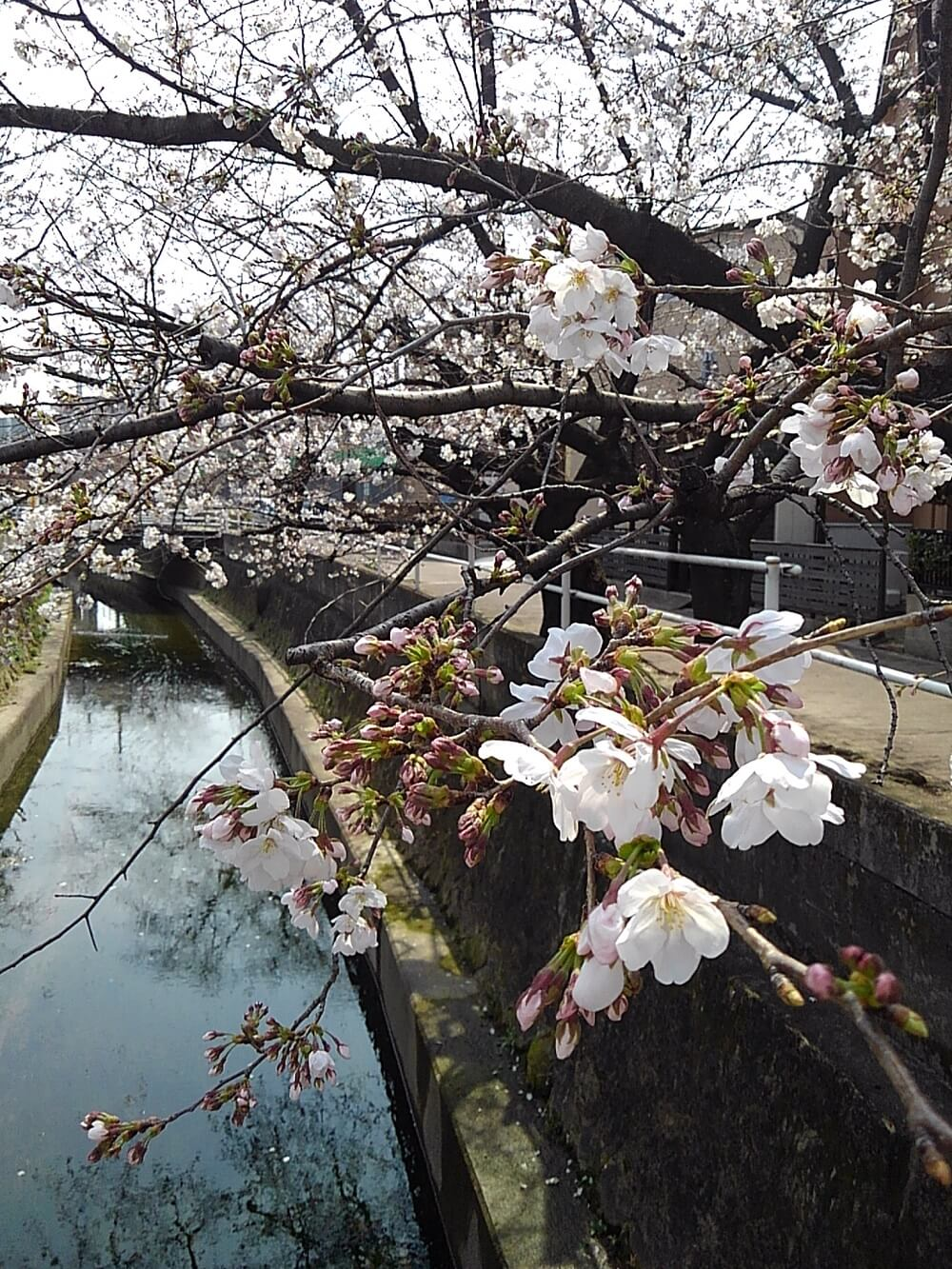 |安水建設|愛知県三河エリアの木造注文住宅・リフォーム桜の季節