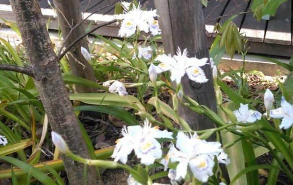 日記|安水建設|愛知県安城市を中心に三河エリアの木造注文住宅・リフォーム夏の匂い