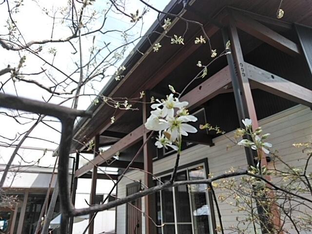 日記|安水建設|愛知県安城市を中心に三河エリアの木造注文住宅・リフォーム春の訪れbyモデル棟